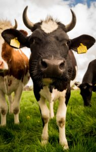 Meat and dairy industry