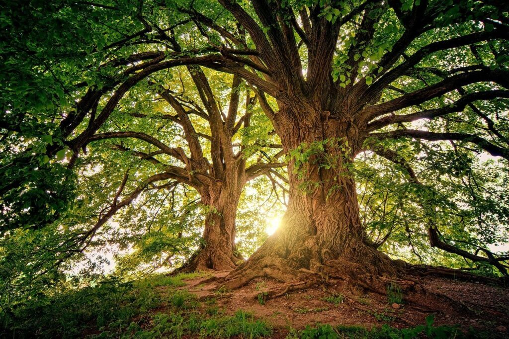 How to slow the ageing process- tree